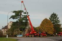 Odstraňování starého stromu v Libuni.