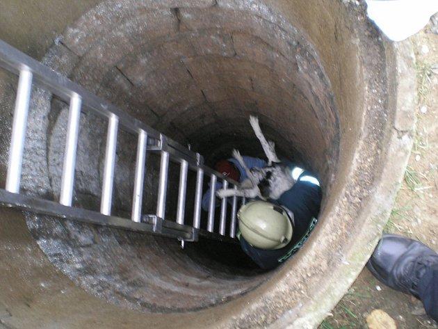 Záchrana psa vhozeného do studny.