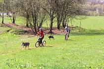 Z ježdění se psími spřeženími v Čisté u Horek.