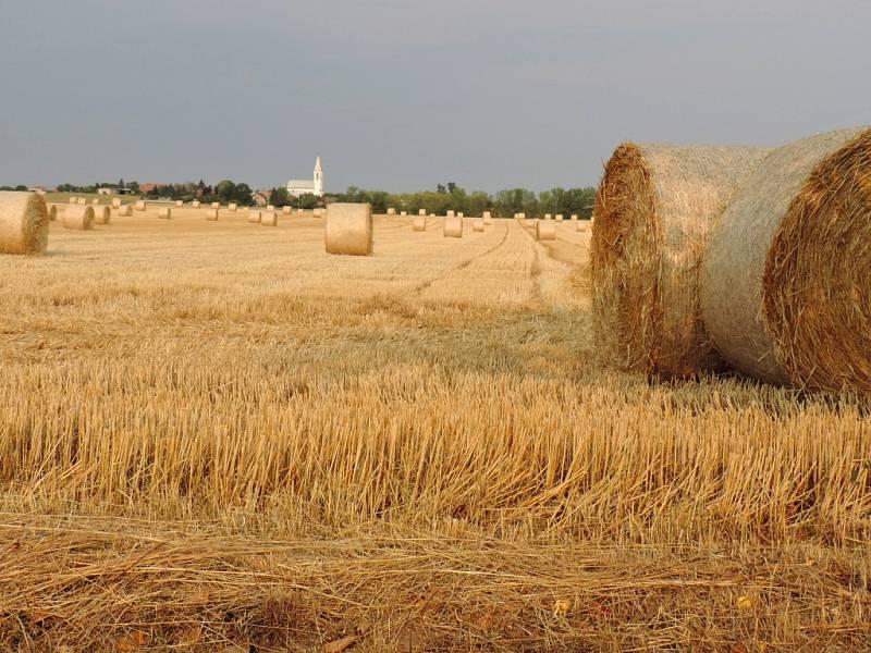 Základních obilovin by se letos podle odhadu mělo sklidit o 7,1 procenta méně než loni.