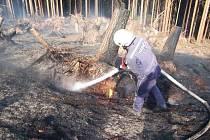 Lesní požár u Pavlišova likvidovali profesionální hasiči z Náchoda.