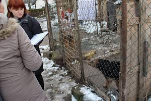 Odebrání dalšího týraného psa ze Sběře na Jičínsku do útulku v Jičíně.
