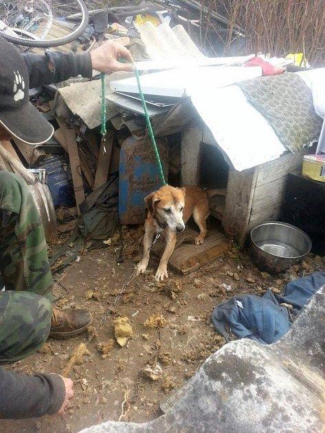 Týraní psi ve Vysokém Veselí.