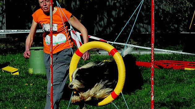 V kempu soutěžili majitelé se svými psy v agility.
