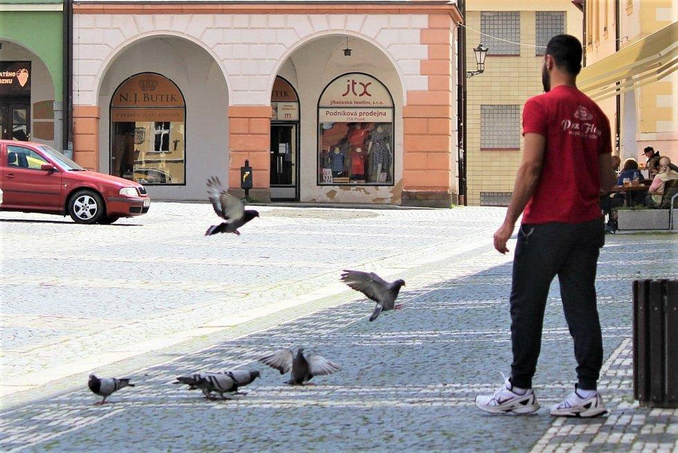 Podnikatelé na Valdštejnově náměstí se kromě jiřiček potýkají také s hejny holubů, kteří se slétají vyzobávat drobky z pizzy.
