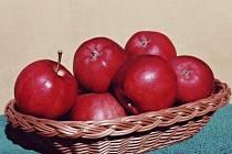 Odrůda jablek Petra.