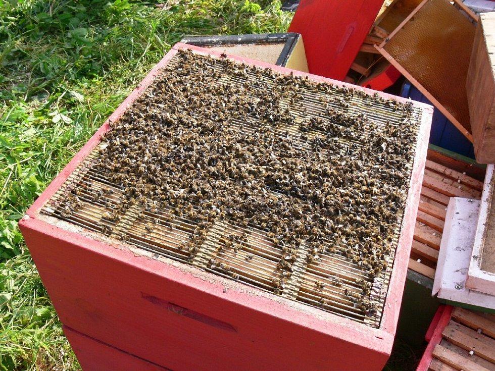 Včely usmrcené benzinem před pálením.