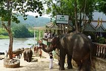Ze Srí Lanky: sloní centrum Pinwalla.