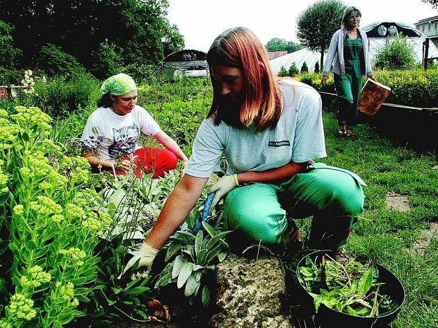 Kopidlenské mladé zahradnice při práci.