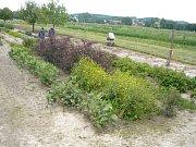 Pěstování rostlin v Markvarticích.