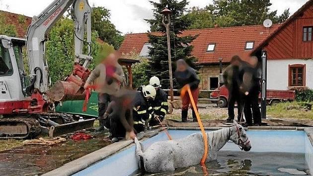 Klisna spadla do bazénu, bohužel nakonec uhynula.