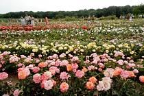 Den otevřených dveří v zahradě plné růží manželů Pelcových.