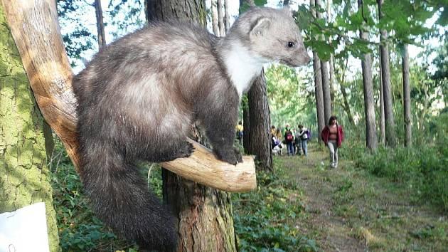 Z exkurze ostroměřských žáků v lese.