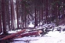 Úklid v Prachovských skalách