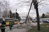 Hasiči odstraňovali také v Hradci Králové následky silného větru.