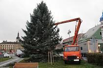Hořičáci už vědí, jaký strom bude letos zářit na jejich náměstí.