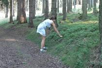 Trhači borůvek mohou způsobit v přírodě velké škody.