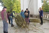 Z projektu Království stromů ve Valdštejnské lodžii.