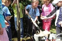 Den Země na hořické ZŠ Na Daliborce: žáci ZŠ přiloží ruku k dílu při sázení stromu (Vojtěch Kolátor).