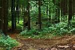 Význačné přírodní lokality geoparku jsou nyní obohaceny o území na Novopacku v okolí potoka Zlatnice.