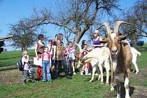 Kozy na Pencově statku v Milkovicích je možné navštívit i s dětmi.
