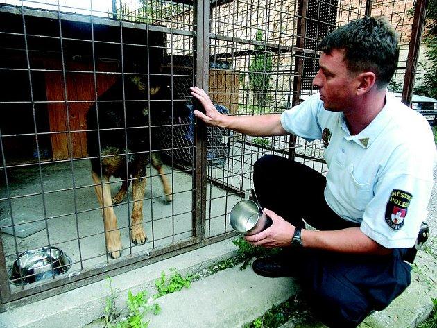 Velitel Městské policie Hořice Stanislav Nosek považuje možnost vybudování psího útulku ve městě za velmi naléhavou záležitost.
