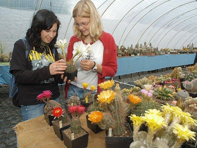 Na jičínském Valdštejnově náměstí jsou ve fóliovníku  vystaveny kaktusy, na snímku Lenka Šulcová (vlevo) s Kateřinou Konopáskovou.