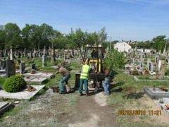 Výsadba nových stromů na miletínském hřbitově.