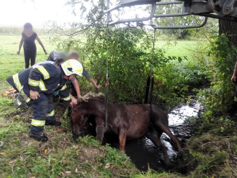 Do koryta náhonu spadl kůň, zůstal zde ležet a nemohl se sám zvednout.