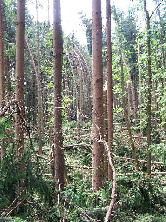Polomy v lese kolem Pusté Proseče.