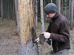 Kůrovcem poškozené lesy