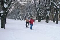 Ideální podmínky pro lyžaře v lipách.