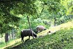 Po celé vsi je možné vidět koně a ovce.