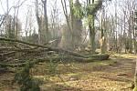 Popadané stromy ve Smetanových sadech v Hořicích.