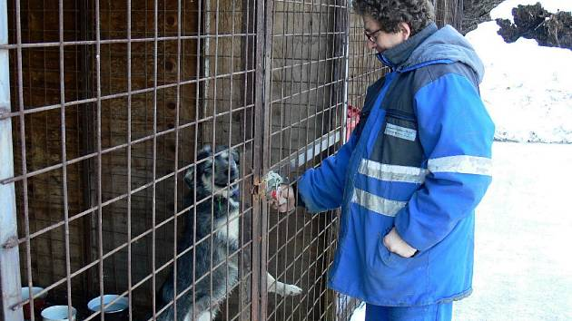 Ze záchytné stanice pro psy v Nové Pace.