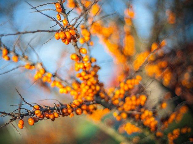 Rady do zahrady: Seriál o podnožích