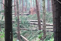 Lesní kalamita mezi Valdovem a Pustou Prosečí na Novopacku.