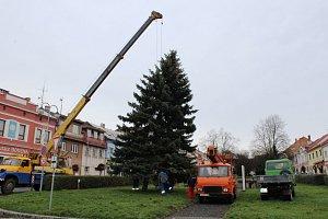 Manévry se povedly. V Hořicích už stojí vánoční strom