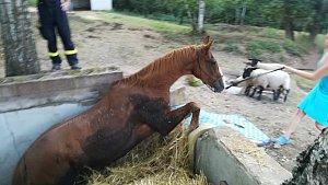 Šárovcova Lhota, záchrana koně z jímky.