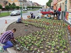 Bělohradské náměstí osázeli kopidlenští zahradníci.