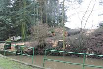 V Úlibicích jsou káceny staré stromy.