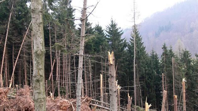 Vichřice Emma způsobila škody i v lesích kolem Vřesníku na Peckovsku.
