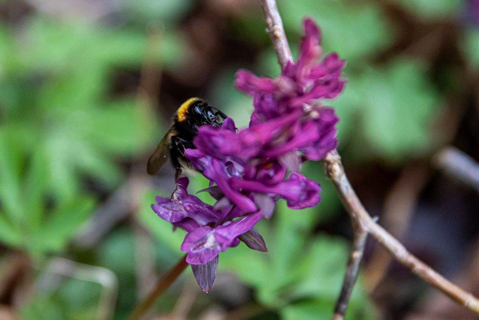 Jarní příroda pučí a kvete.