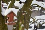 Do víkendového sčítání ptactva, které pod názvem Ptačí hodinka organizuje Česká společnost ornitologická, se mohl zapojit každý, kdo má ve svém okolí krmítko.