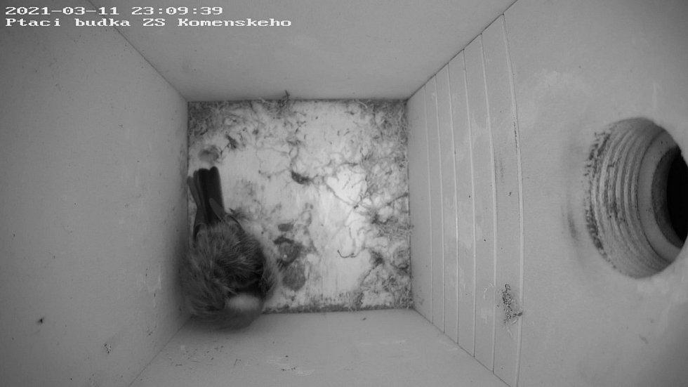 Sledovat čápy v hnízdě bychom mohli pomocí kamer
