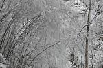Prachovské skály v zimním hávu.
