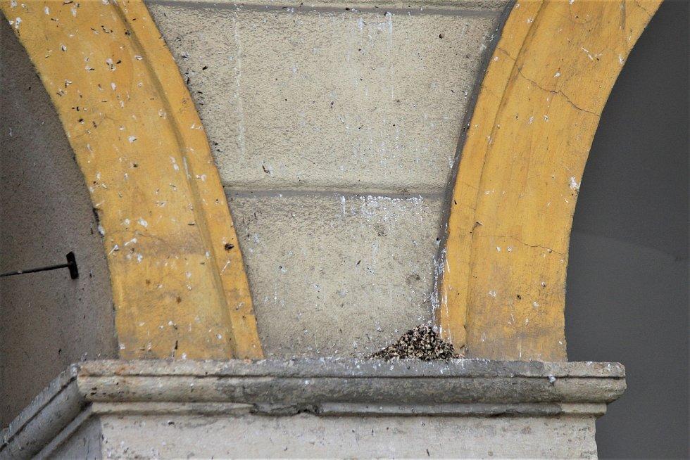 V souvislosti s hnízděním jiřiček souvisí především nepořádek. Pod hnízdy se tvoří hromádky trusu, které se mohou při nepravidelném odklízení docela nashromáždit.