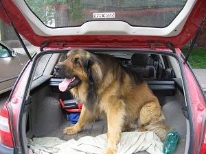 Vzít ho s sebou na výlet, nebo najít psí hotel? Takovou otázkou se musí zabývat páníčkové svých psů.