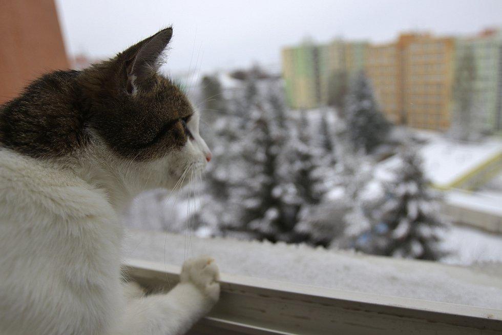 Nepříjemné počasí bude na Vysočině pokračovat. Bude chladno a větrno. Ilustrační foto.