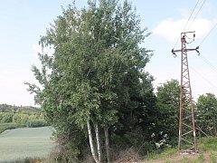 Josef Jurnečka nechápe, proč se na jeho pozemku dodržuje ochranné pásmo sedm metrů a jiné stromy jsou drátům podstatně blíže.